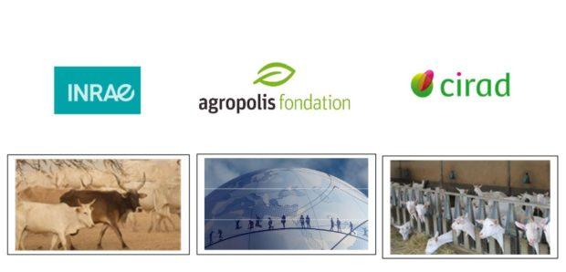 Webinaire  Les activités d'élevage au prisme  de l'agroécologie et de la bioéconomie